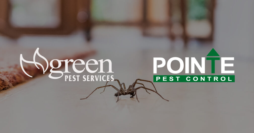 Green Pest Client Story